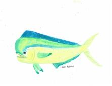 Dolphin - Mahi